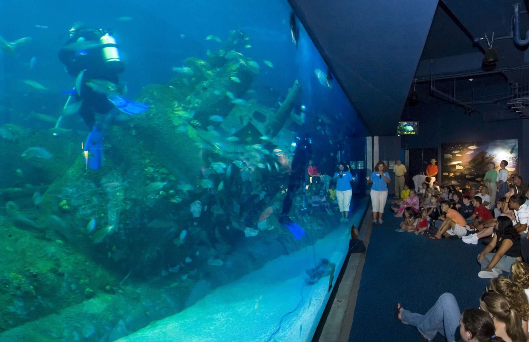 North Carolina Aquarium at Pine Knoll Shores   Clancy ...