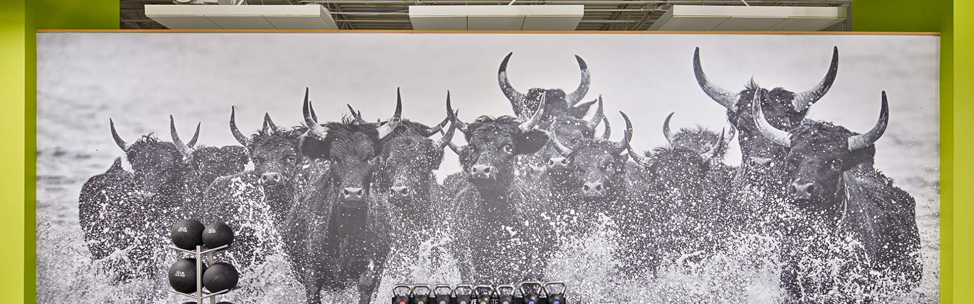 Bull mural in the USF wellness facility